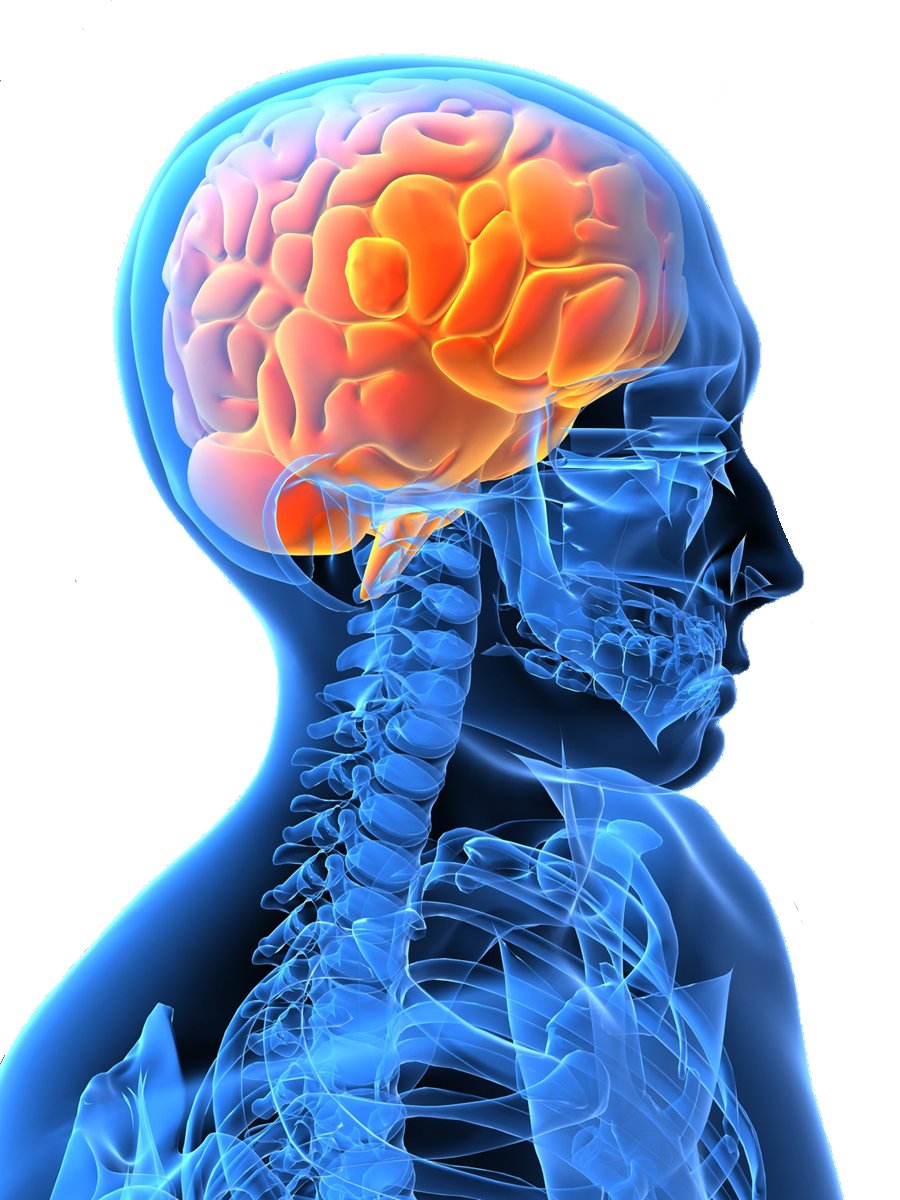 Stroke Scales » Department of Neurology » College of Medicine ...