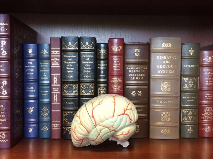 books and brain photo